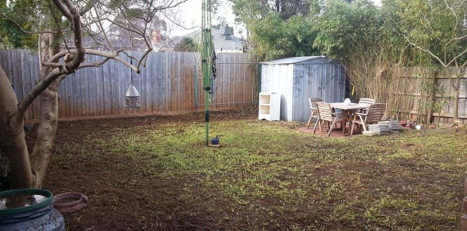 Almost bare lawn with some regrowth.
